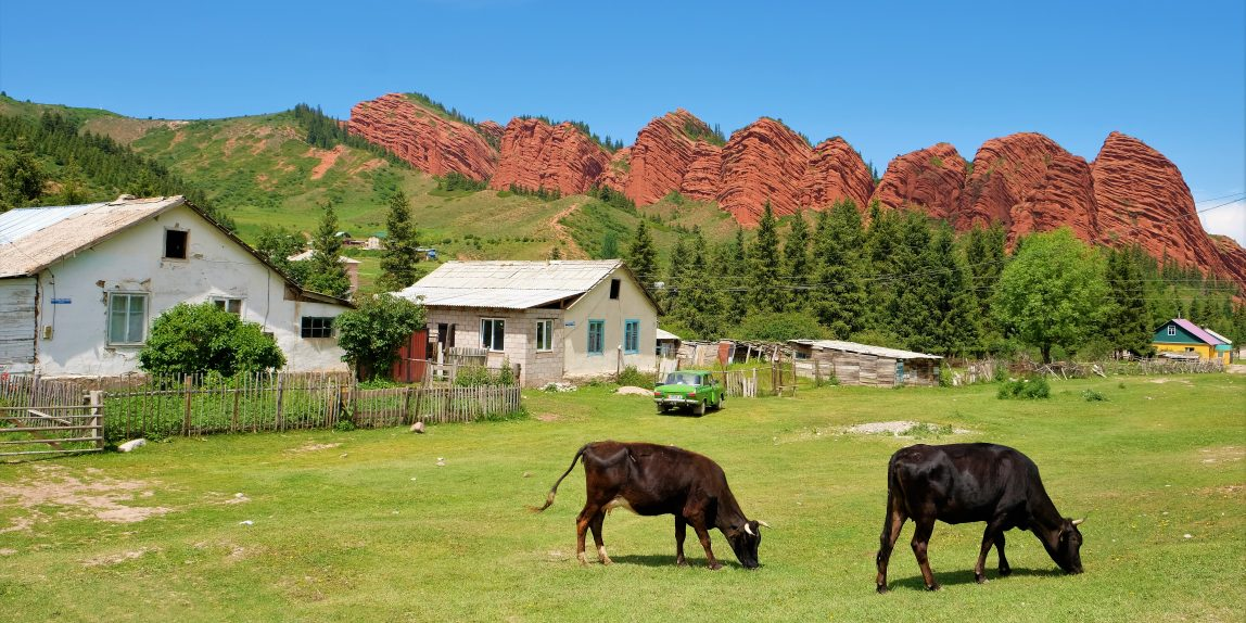"cows grazing in front of the red sandstone formation ""Seven Bulls"""
